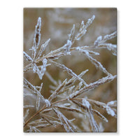 Ice Frozen On Plant Branches Stretched Canvas 24X32 Wall Decor