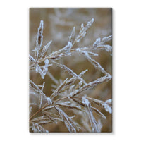 Ice Frozen On Plant Branches Stretched Canvas 24X36 Wall Decor