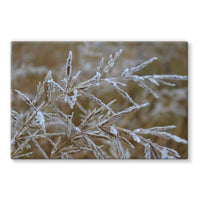 Ice Frozen On Plant Branches Stretched Canvas 30X20 Wall Decor