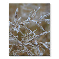 Ice Frozen On Plant Branches Stretched Eco-Canvas 11X14 Wall Decor