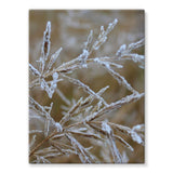 Ice Frozen On Plant Branches Stretched Eco-Canvas 18X24 Wall Decor