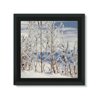 Ice Frozen On Plants Framed Canvas 14X14 Wall Decor