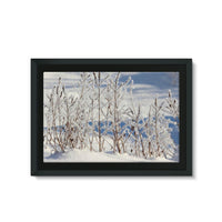 Ice Frozen On Plants Framed Canvas 36X24 Wall Decor