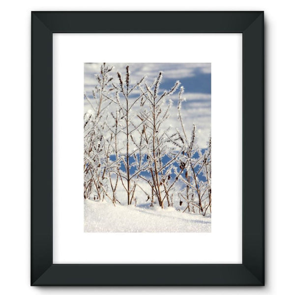 Ice Frozen On Plants Framed Fine Art Print 12X16 / Black Wall Decor