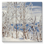 Ice Frozen On Plants Stretched Canvas 10X10 Wall Decor