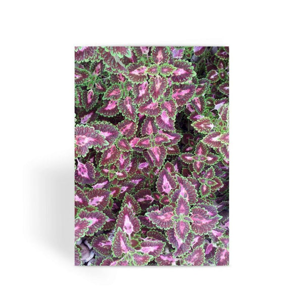 Multi Color Zigzag Greeting Card 1 Prints
