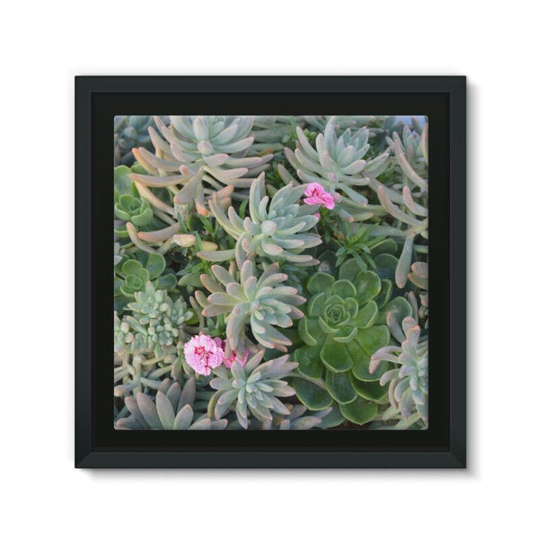 Plant With Pink Flowers Framed Canvas 12X12 Wall Decor