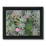 Plant With Pink Flowers Framed Canvas 16X12 Wall Decor
