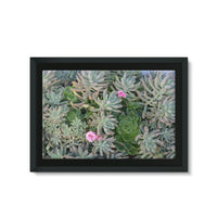 Plant With Pink Flowers Framed Canvas 36X24 Wall Decor