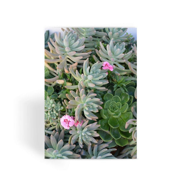 Plant With Pink Flowers Greeting Card 1 Prints