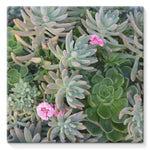 Plant With Pink Flowers Stretched Canvas 10X10 Wall Decor