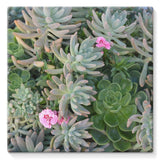 Plant With Pink Flowers Stretched Canvas 14X14 Wall Decor