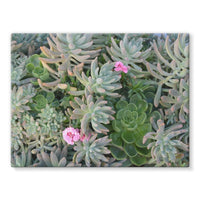 Plant With Pink Flowers Stretched Canvas 16X12 Wall Decor