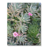 Plant With Pink Flowers Stretched Eco-Canvas 11X14 Wall Decor