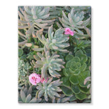 Plant With Pink Flowers Stretched Eco-Canvas 18X24 Wall Decor