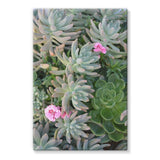 Plant With Pink Flowers Stretched Eco-Canvas 20X30 Wall Decor