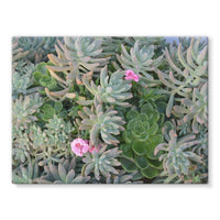 Plant With Pink Flowers Stretched Eco-Canvas 24X18 Wall Decor