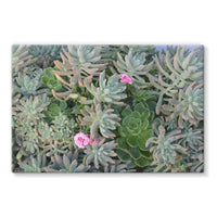 Plant With Pink Flowers Stretched Eco-Canvas 30X20 Wall Decor