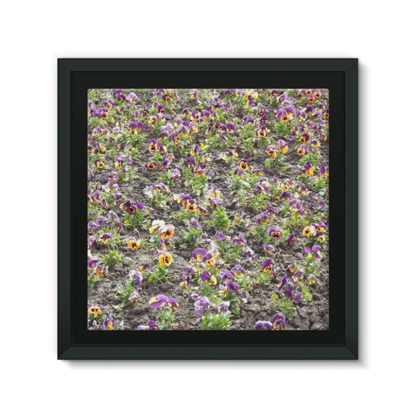 Portulaca Grandiflora Framed Canvas 12X12 Wall Decor