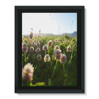 Portulaca Grandiflora Framed Canvas 12X16 Wall Decor