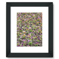 Portulaca Grandiflora Framed Fine Art Print 12X16 / Black Wall Decor
