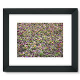 Portulaca Grandiflora Framed Fine Art Print 16X12 / Black Wall Decor