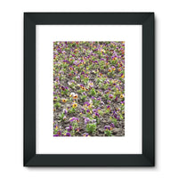 Portulaca Grandiflora Framed Fine Art Print 18X24 / Black Wall Decor