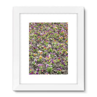 Portulaca Grandiflora Framed Fine Art Print 18X24 / White Wall Decor