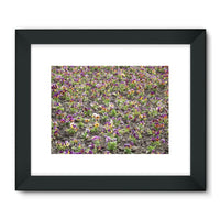 Portulaca Grandiflora Framed Fine Art Print 32X24 / Black Wall Decor
