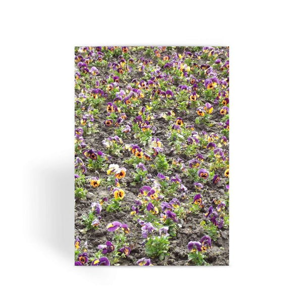 Portulaca Grandiflora Greeting Card 1 Prints