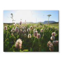 Portulaca Grandiflora Stretched Canvas 24X18 Wall Decor