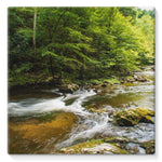 River Surrounded By Trees Stretched Canvas 10X10 Wall Decor