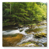 River Surrounded By Trees Stretched Canvas 14X14 Wall Decor