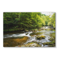 River Surrounded By Trees Stretched Canvas 36X24 Wall Decor