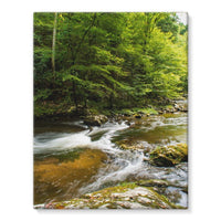 River Surrounded By Trees Stretched Eco-Canvas 11X14 Wall Decor