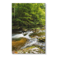 River Surrounded By Trees Stretched Eco-Canvas 24X36 Wall Decor