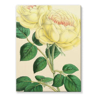 Rose Margottin 1869 Stretched Canvas 24X32 Wall Decor