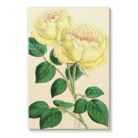 Rose Margottin 1869 Stretched Canvas 24X36 Wall Decor