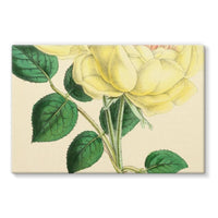 Rose Margottin 1869 Stretched Canvas 30X20 Wall Decor