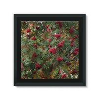Rowan Berries Framed Eco-Canvas 10X10 Wall Decor
