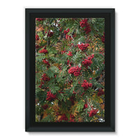 Rowan Berries Framed Eco-Canvas 24X36 Wall Decor