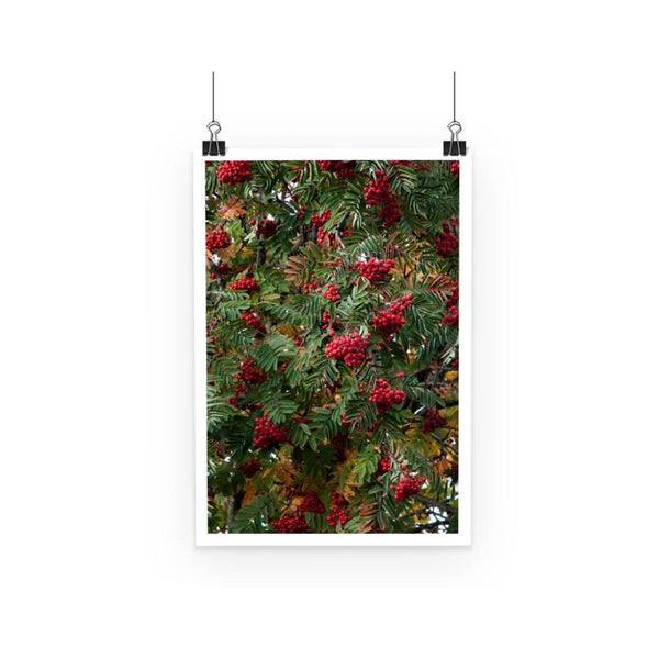 Rowan Berries Poster A3 Wall Decor