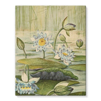 The Waterlilies 1905 Stretched Eco-Canvas 11X14 Wall Decor