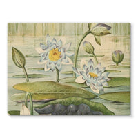 The Waterlilies 1905 Stretched Eco-Canvas 24X18 Wall Decor