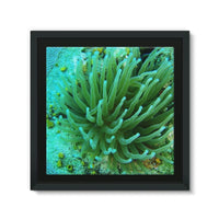 Underwater Coral Reef Framed Canvas 12X12 Wall Decor