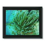 Underwater Coral Reef Framed Canvas 16X12 Wall Decor