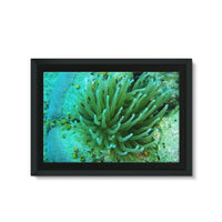 Underwater Coral Reef Framed Canvas 36X24 Wall Decor