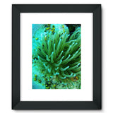 Underwater Coral Reef Framed Fine Art Print 12X16 / Black Wall Decor