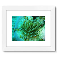 Underwater Coral Reef Framed Fine Art Print 16X12 / White Wall Decor