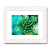 Underwater Coral Reef Framed Fine Art Print 32X24 / White Wall Decor